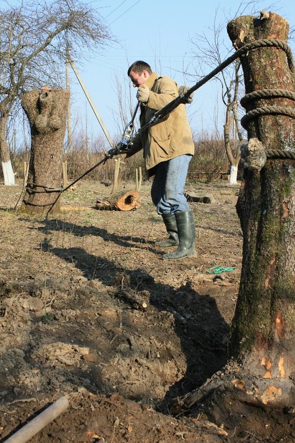Корчевание деревьев своими руками
