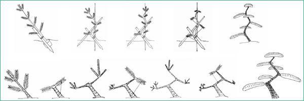 является формирование кроны сосны обыкновенной схема изготавливается таких натуральных