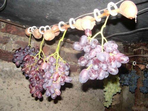Как сохранить свежий виноград до зимы.